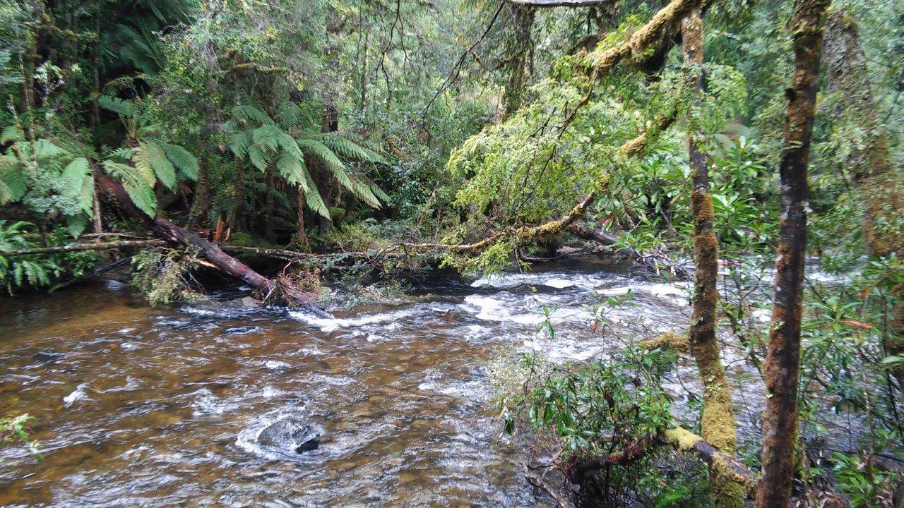 Surprise river that joins Franklin River (Edwin Mah)