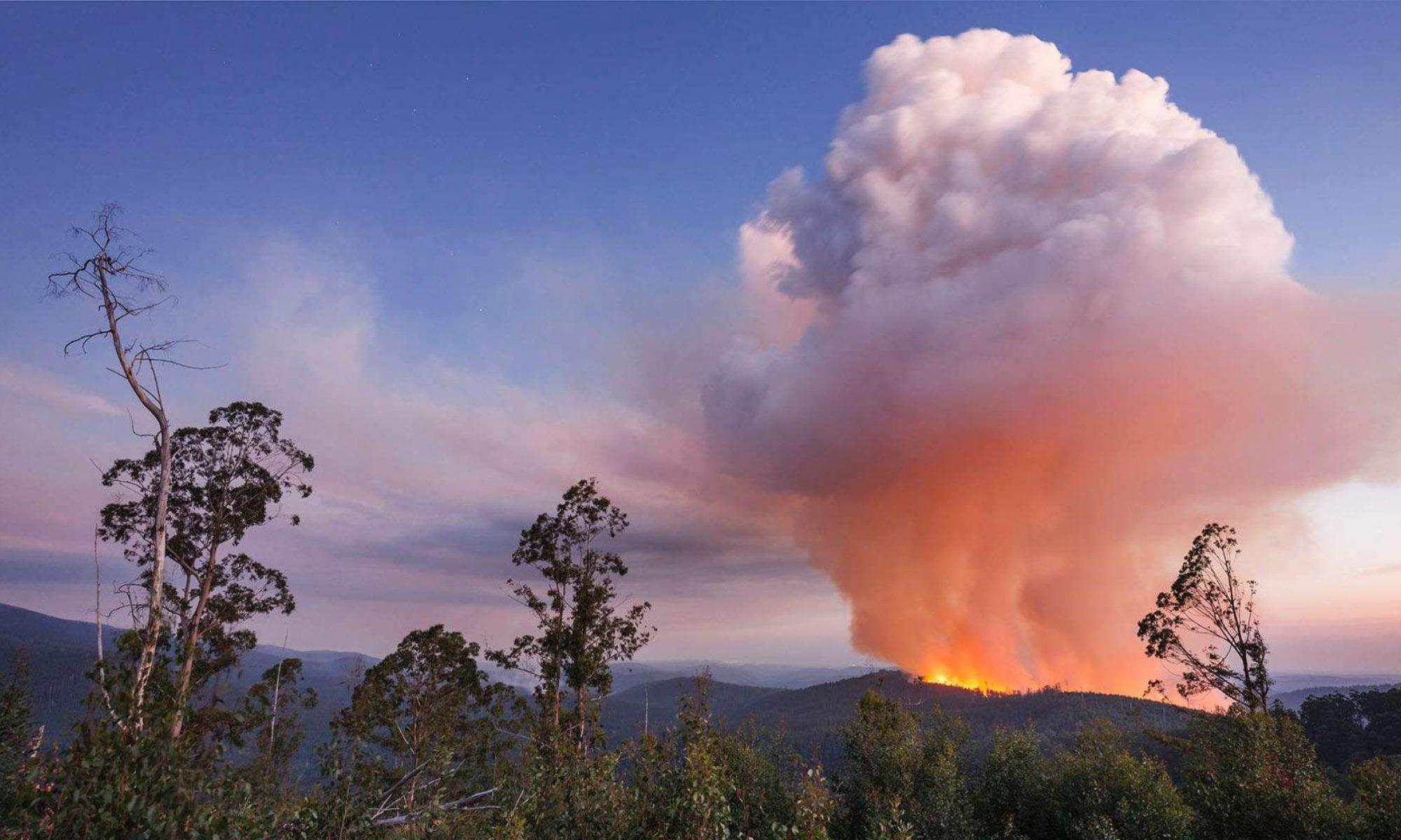 Logging burn off after clear-felling (Chris Taylor)